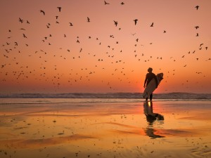 Birds«kabessasnuar»