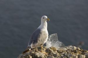 Neus Ripoll_O novo tesouro da gaivota